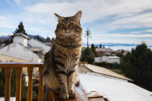 Looking regal and majestic, this is Pancho, the king of Casa de Mara!