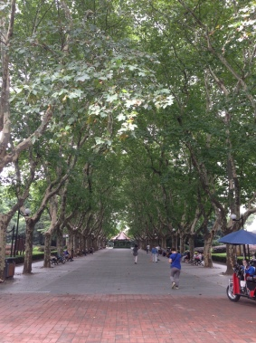 The greenest street I saw in Shanghai happened to be just down the street from my apartment!