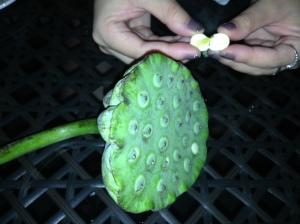 Sampling Crazy Chinese Fruits for Desert. (Edible part of the Lotus Flower)