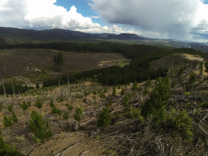 Pine tree logging in New Zealand is not viewed as too environmentally unsound since pine trees are an invasive species, but nonetheless leaves the land looking scarred