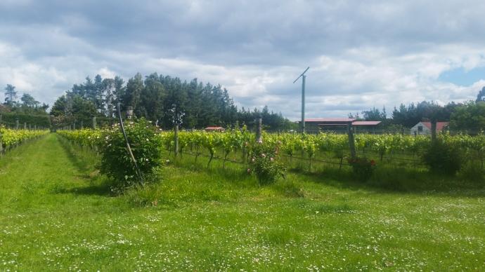 Gladstone Vineyard