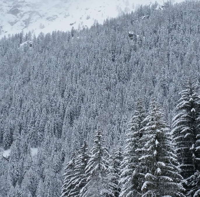 This is the way I like to see trees while on a ski trip